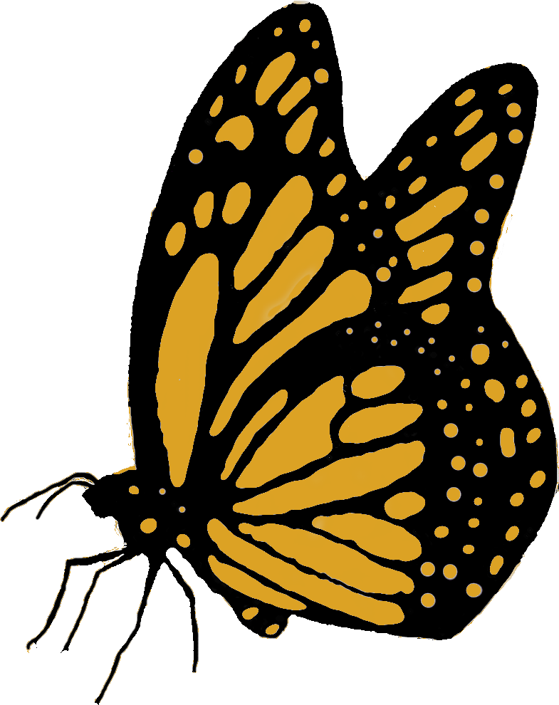 Drawing of a small yellow butterfly.